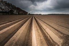 Campo di agricoltura dell'aratro dopo la semina Fotografia Stock Libera da Diritti