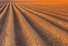 Campo di agricoltura dell'aratro prima della semina Fotografia Stock