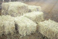 Campo di agricoltura della balla di fieno in azienda agricola Immagine Stock