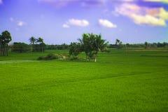 Campo di agricoltura in India Fotografia Stock Libera da Diritti