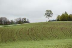 Campo di agricoltura in primavera Fotografia Stock