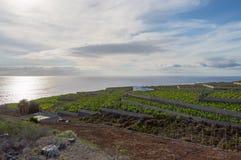 Campo di agricoltura in scale l'isola Immagini Stock Libere da Diritti
