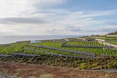 Campo di agricoltura in scale l'isola di Tenerife Fotografia Stock