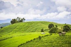 Campo di agricoltura sulla collina nel PA Pong Pieng Chiang Mai, Tailandia Immagine Stock Libera da Diritti