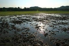 Campo di agricoltura in Tailandia Immagine Stock