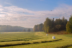 Campo di autunno Immagine Stock