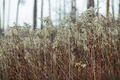 Campo di autunno e fiori secchi immagine stock libera da diritti