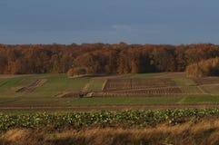 Campo di autunno in Polonia Immagini Stock
