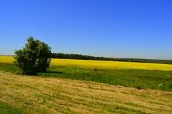 Campo di autunno sotto il cielo blu Fotografia Stock Libera da Diritti