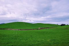 Campo di azienda agricola in Tasmania, Australia Fotografia Stock