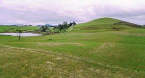 Campo di azienda agricola in Tasmania, Australia Immagine Stock Libera da Diritti