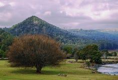 Campo di azienda agricola in Tasmania, Australia Fotografia Stock Libera da Diritti