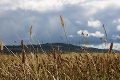 Campo di battaglia di Culloden vicino ad Inverness, Scozia fotografia stock libera da diritti