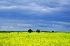 Campo di Canola Fotografie Stock