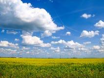 Campo di canola con bello cielo blu con i cumuli Fotografia Stock