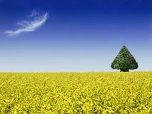 campo di canola con l'albero Fotografie Stock
