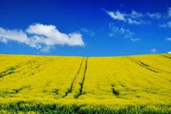 Campo di Canola, seme di ravizzone Immagine Stock Libera da Diritti