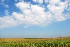 Campo di cereale 05 Immagini Stock