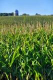 Campo di cereale Immagine Stock Libera da Diritti