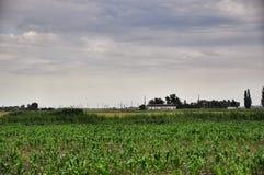 Campo di cereale Agricoltura in Taman Immagine Stock
