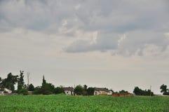 Campo di cereale Agricoltura in Taman Immagini Stock Libere da Diritti