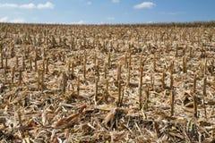 Campo di cereale in Baviera (Germania) dopo la raccolta Fotografia Stock Libera da Diritti