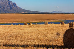 Campo di cereale con le balle di paglia Immagini Stock