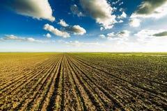 Campo di cereale crescente Immagini Stock