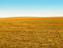 Campo di cereale dell'oro Immagini Stock