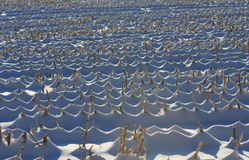 Campo di cereale di inverno Fotografia Stock