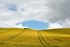 Campo di cereale dorato Immagine Stock Libera da Diritti