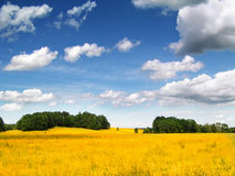 Campo di cereale dorato fotografia stock