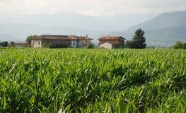 Campo di cereale ed azienda agricola 1 Fotografia Stock Libera da Diritti