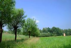 Campo di cereale, granulo della segale Fotografia Stock