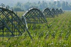 Campo di cereale irrigato fotografia stock libera da diritti