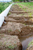 Campo di cereale irrigato immagine stock libera da diritti