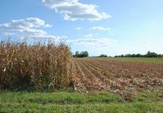 Campo di cereale parzialmente raccolto Fotografia Stock