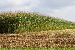 Campo di cereale parzialmente raccolto Fotografie Stock Libere da Diritti