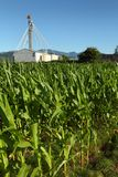 Campo di cereale, priorità bassa della costruzione del granulo Fotografia Stock Libera da Diritti