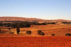 Campo di cereale raccolto Fotografia Stock