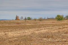 Campo di cereale raccolto Fotografia Stock Libera da Diritti