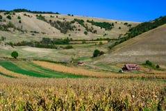Campo di cereale Romania Fotografia Stock