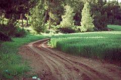 Campo di coltivare il grano Immagini Stock Libere da Diritti