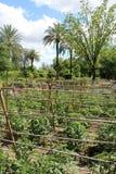 Campo di Eco Fotografie Stock Libere da Diritti