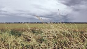 Campo di erba fotografia stock