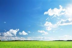 Campo di erba fotografia stock libera da diritti