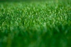 Campo di erba Fotografie Stock