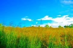 Campo di erba Fotografie Stock Libere da Diritti