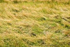 Campo di erba alta Fotografia Stock