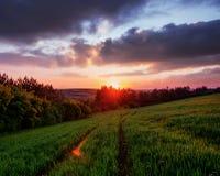 Campo di erba alta, il tramonto scenico di verde del paesaggio della primavera Fotografia Stock